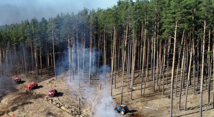 В четырех районах Чувашии запретили жителям ходить в лес