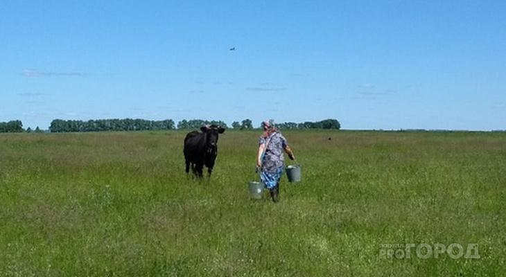 В Чувашии владельцам коров начали раздавать деньги