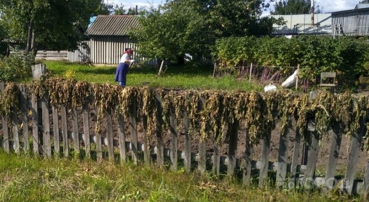 В Чувашии соседи судились за границу участка, а в итоге стали должны государству по 20-30 тысяч рублей