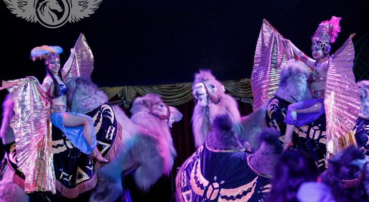 Опасные трюки на большой высоте, аравийские верблюды и нильские крокодилы - скоро в Чебоксары приедет цирк-шапито