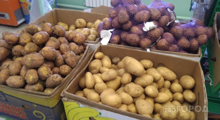 Чувашия находится на 10-м месте по стоимости картошки среди регионов