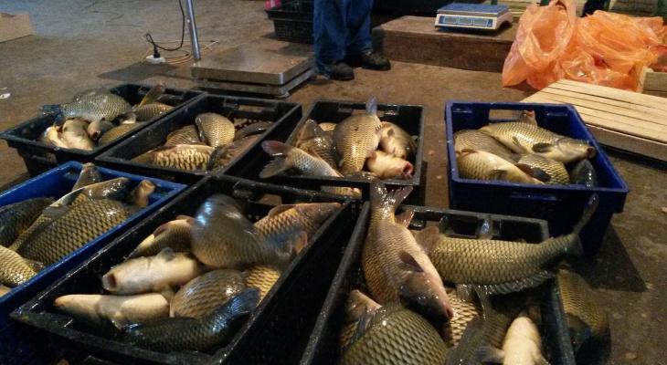 Знаменитый рыбхоз Чувашии планирует вырастить в этом году  300 тонн рыбы