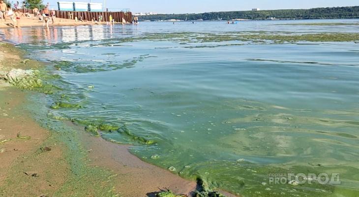 Специалисты объяснили, почему Волга в Чувашии ежегодно превращается в зеленую муть