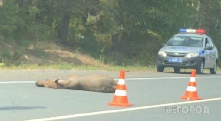 Лось погиб под колесами Toyota Camry в Комсомольском районе