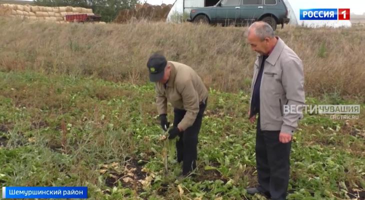 """Аграрии Чувашии рассказали о потерях урожая: """"Этот год оказался даже хлеще засушливого и жаркого 2010"""""""