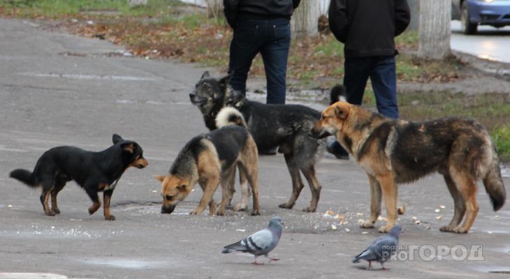 Жители Шумерли боятся за свой скот: стая собак загрызла кроликов и покусала козу