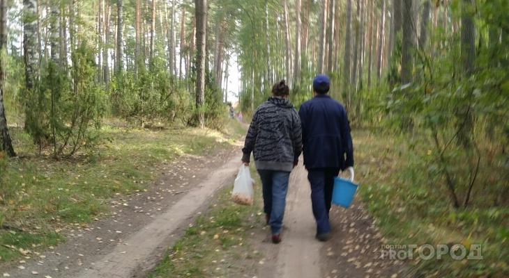 В шумерлинских лесах полночи искали грибников