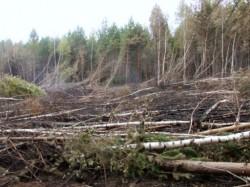 Лесничий Чувашии заставлял сельчан незаконно вырубать лес